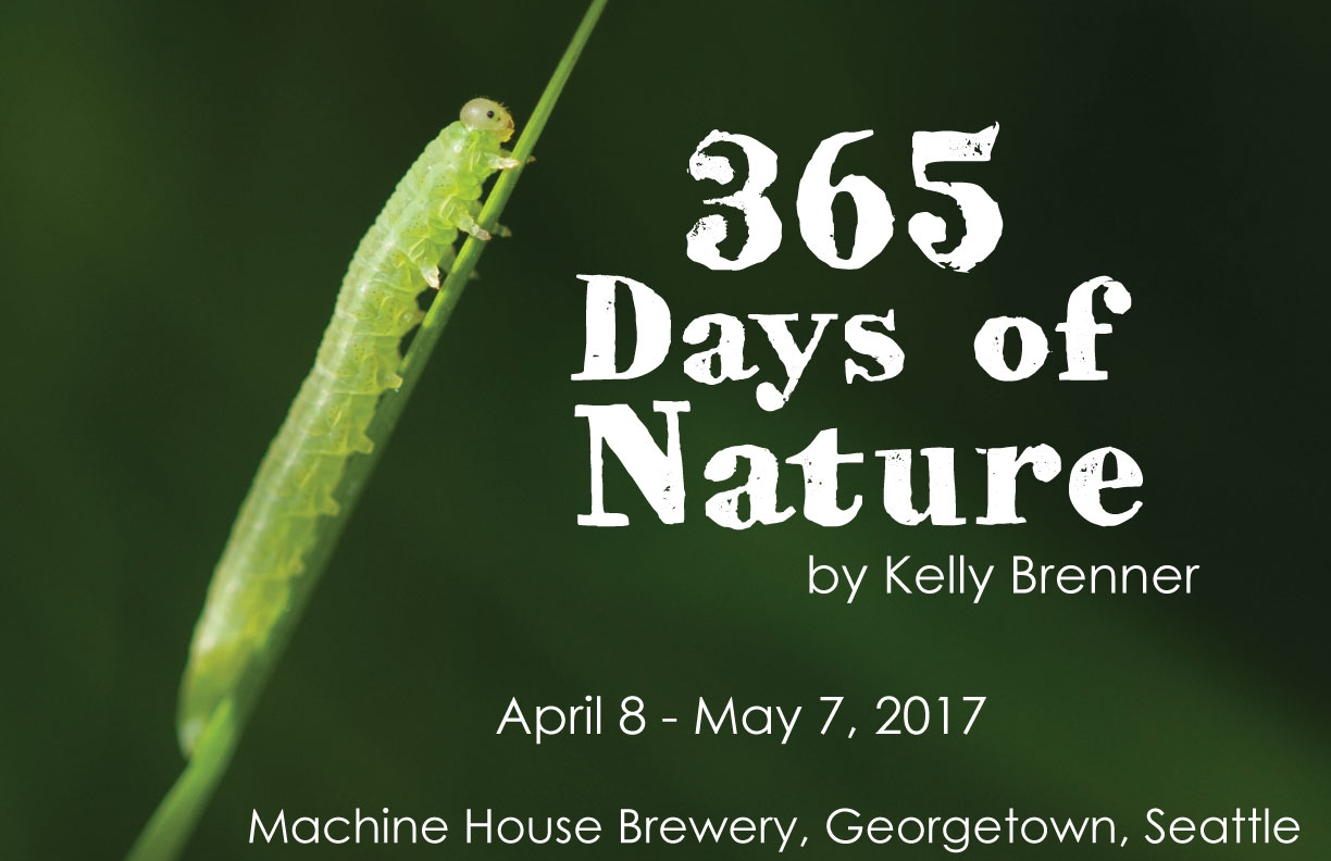 365-Days-of-Nature-Poster-4