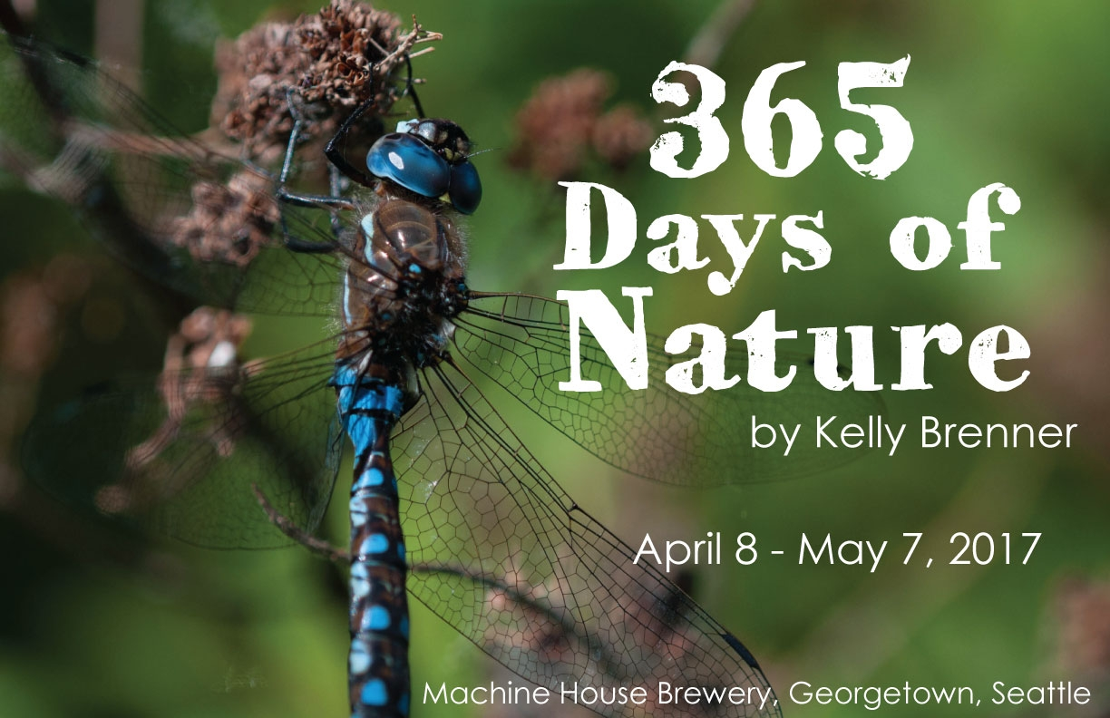 365-Days-of-Nature-Poster-5