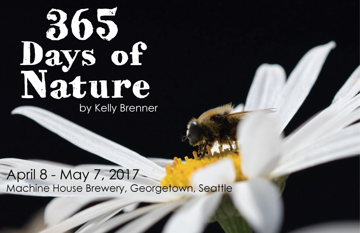 365-Days-of-Nature-Poster-7