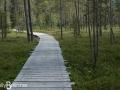 Tunturiaapa Nature trail
