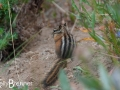 Chipmunk on the Silver Forest Trail