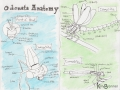 Odonata Anatomy