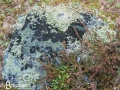 Lichen covered rock, Flotane along the Snow Road, Norway