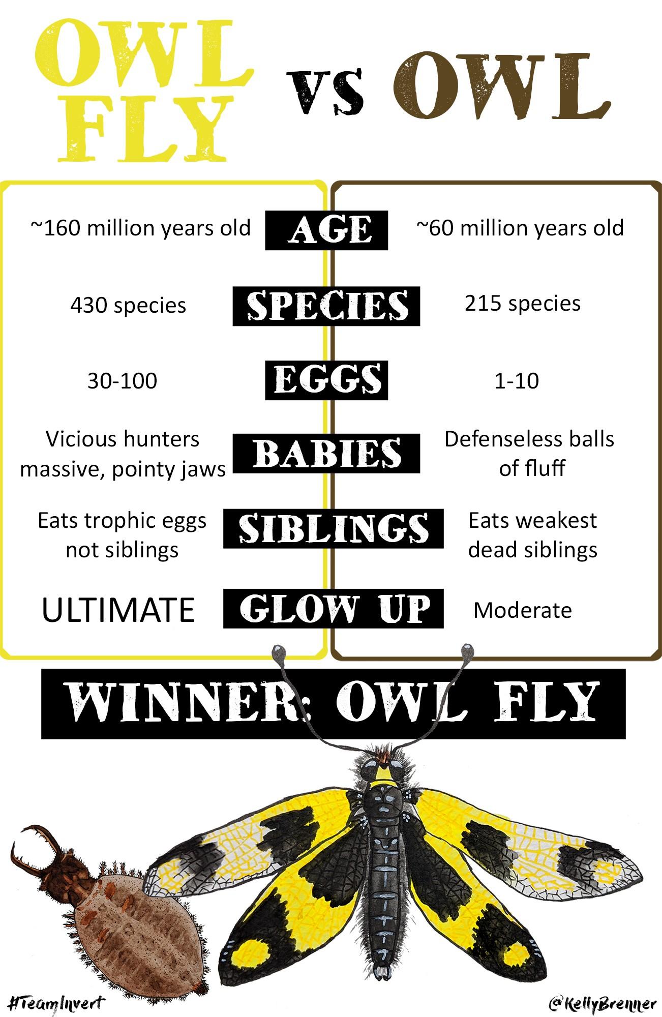 owl-vs-owl-fly