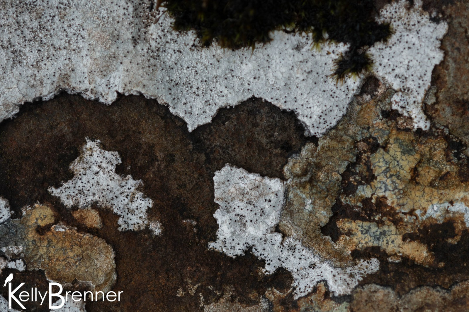 Lichen, The Quiraing