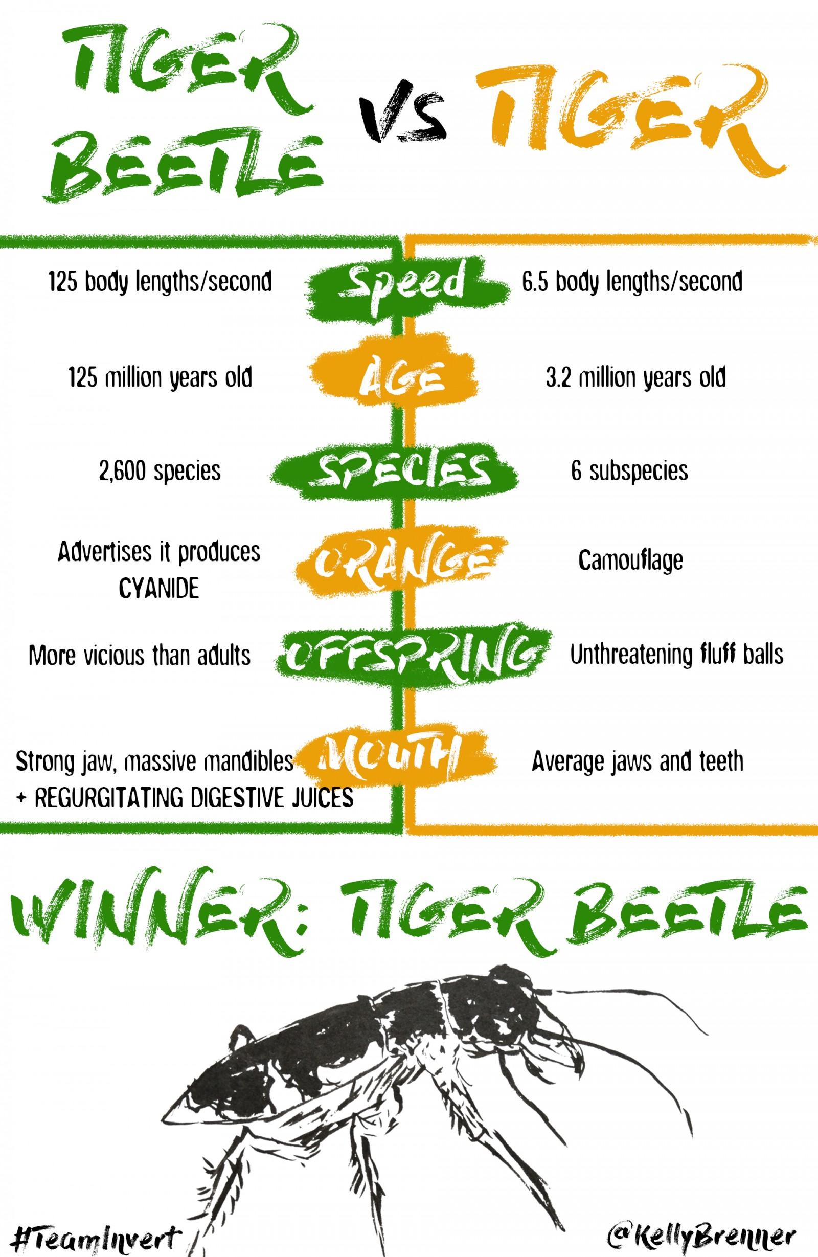 tiger-beetle-vs-tiger2