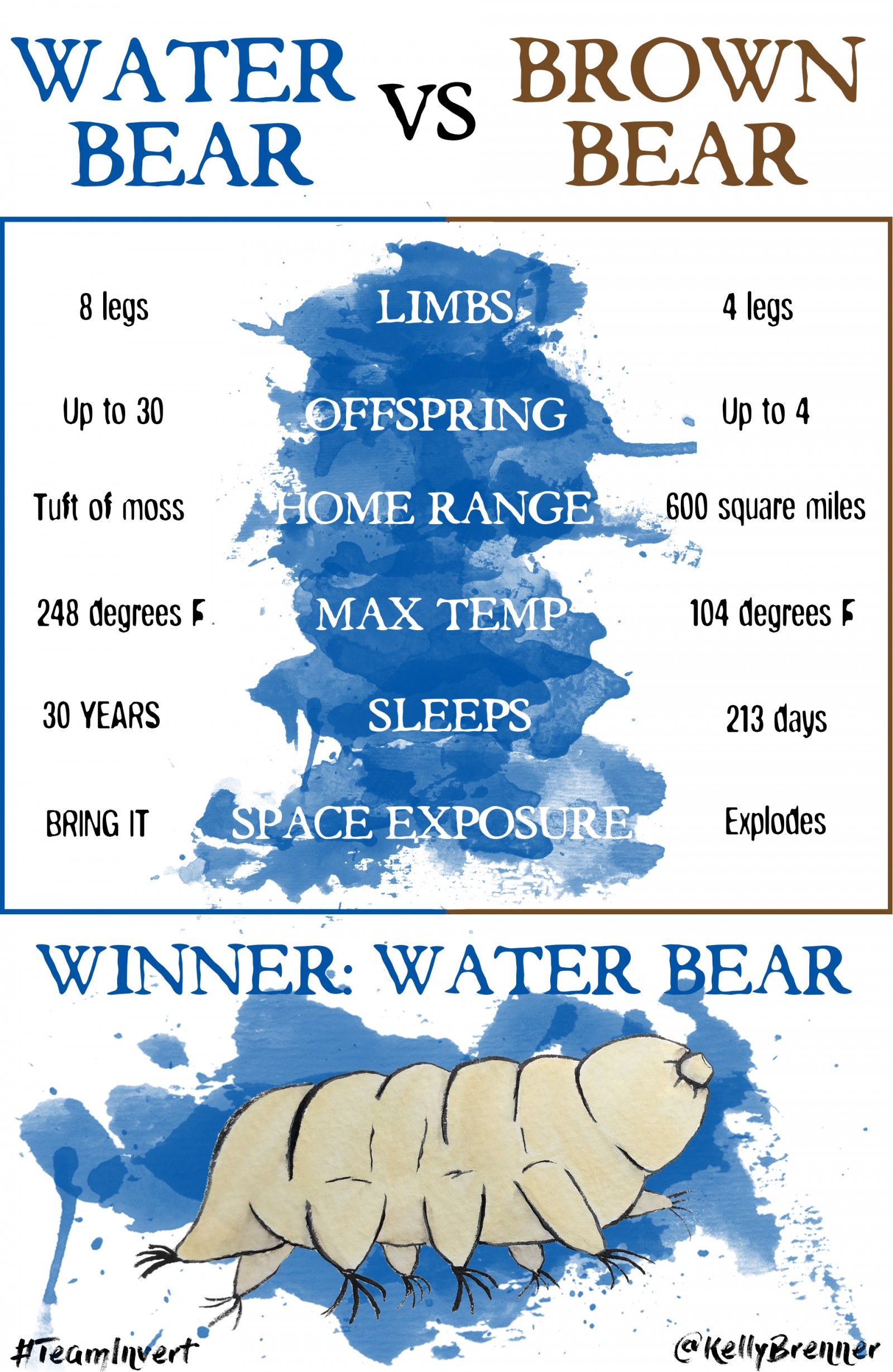 water-bear-vs-brown-bear