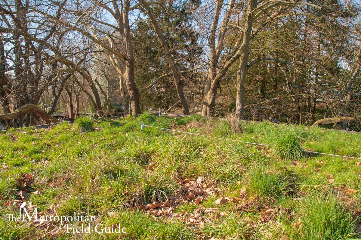 Zoomazium's Green Roof:: Woodland Park Zoo