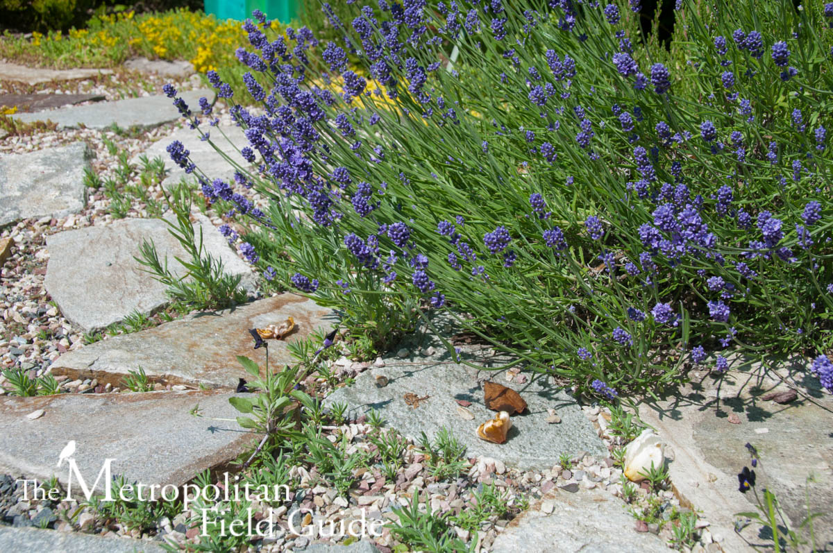 Book Review:: Attracting Birds, Butterflies and Other Backyard Wildlife