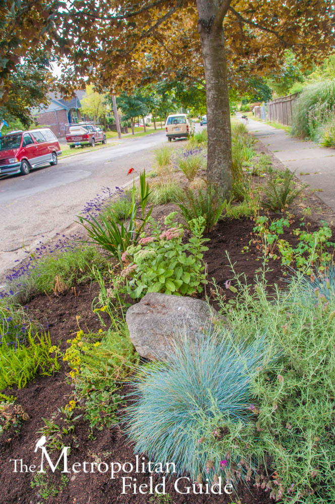 Pollinator Pathway: bringing pollinators to a Seattle neighborhood