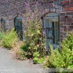 Alley Habitat