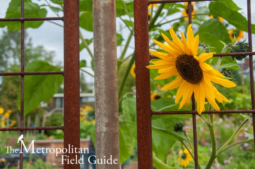 Bradner Gardens Park