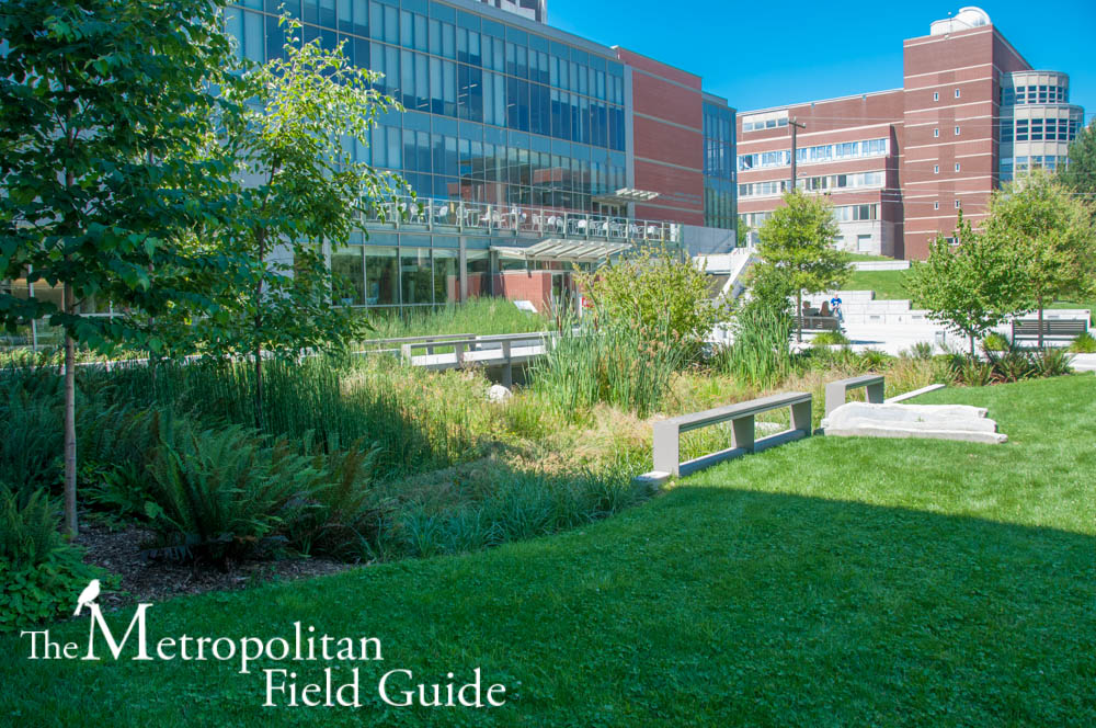 Seattle University Campus Habitat