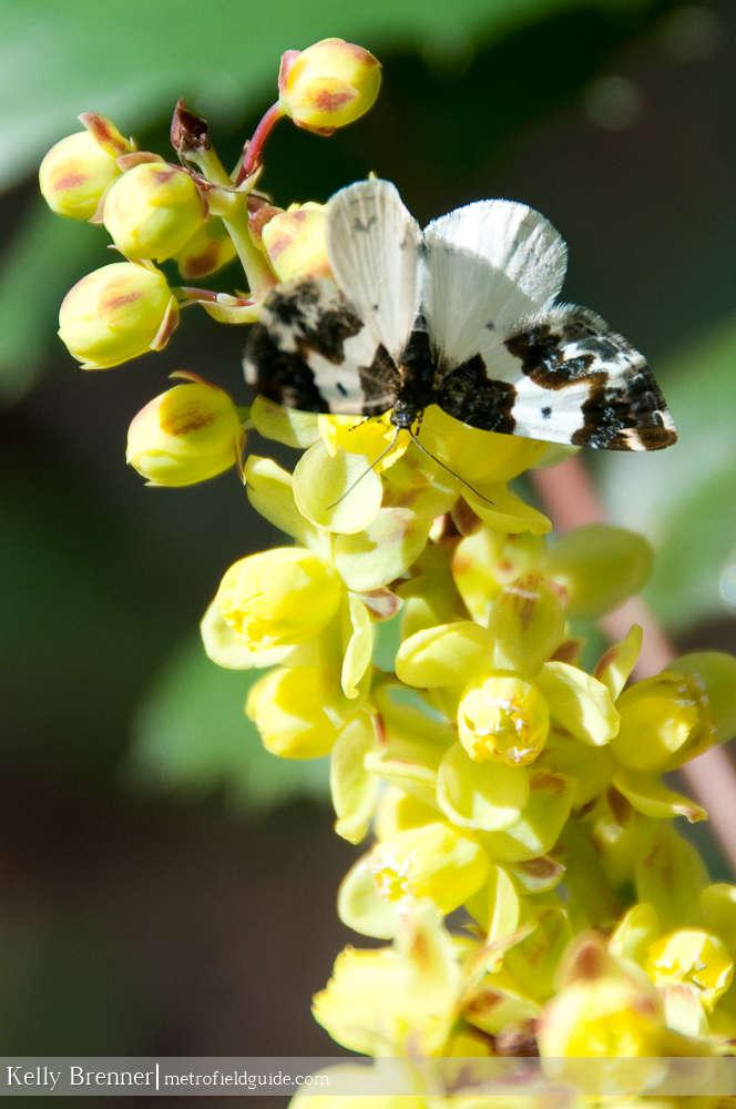 Spring Moth