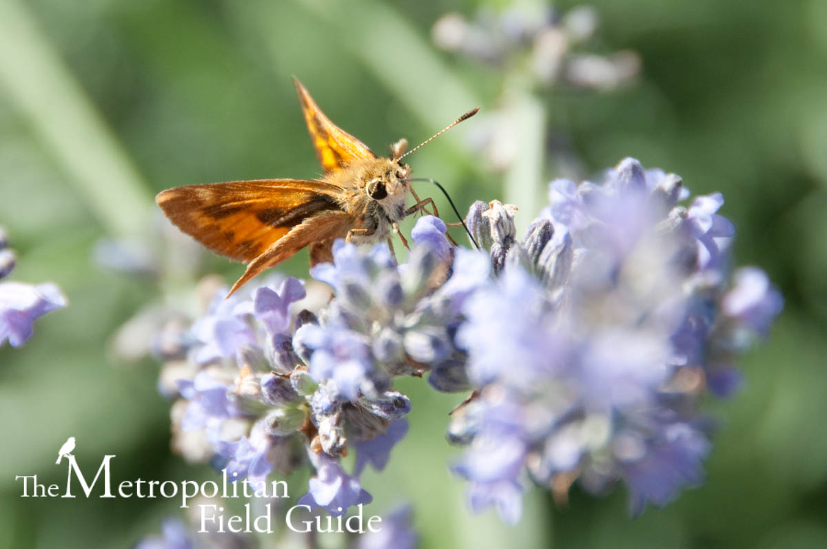 Book Review:: Butterflies and Butterfly Gardening in the Pacific Northwest
