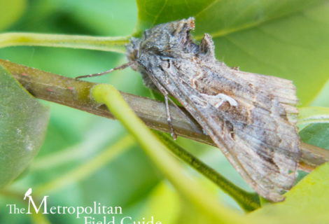 Book Review:: Discovering Moths: Nighttime Jewels in Your Own Backyard