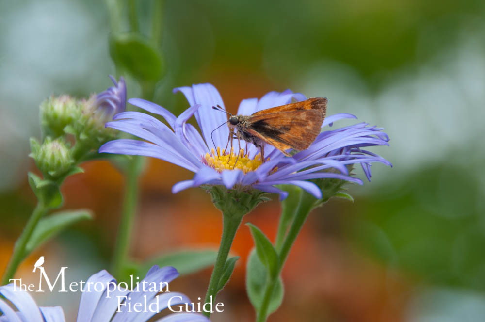 Book Review:: Attracting Native Pollinators