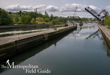 Ballard Locks and Botanical Garden