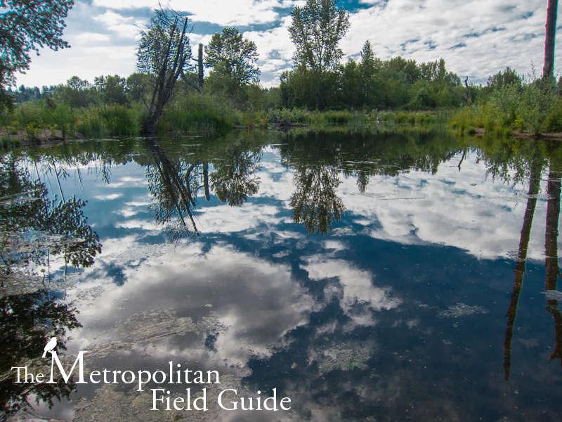 Magnuson Park:: Reconstructed Wetlands