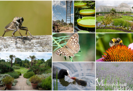 Native Plants and Wildlife Gardens Post:: A Visit to Kew Gardens