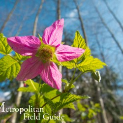 Native Plants and Wildlife Gardens Post:: 5 Great Parks - Seattle Edition