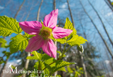 Native Plants and Wildlife Gardens Post:: 5 Great Parks – Seattle Edition