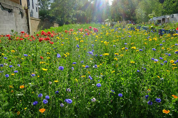 Mobile Gardeners Park (River of Flowers South London)