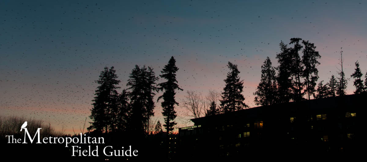 Night Flight To Nowhere Starts In Uw >> The Metropolitan Field Guide The Experience Of 10 000 Crows The