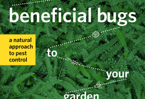 Book Review:: Attracting Beneficial Bugs to Your Garden