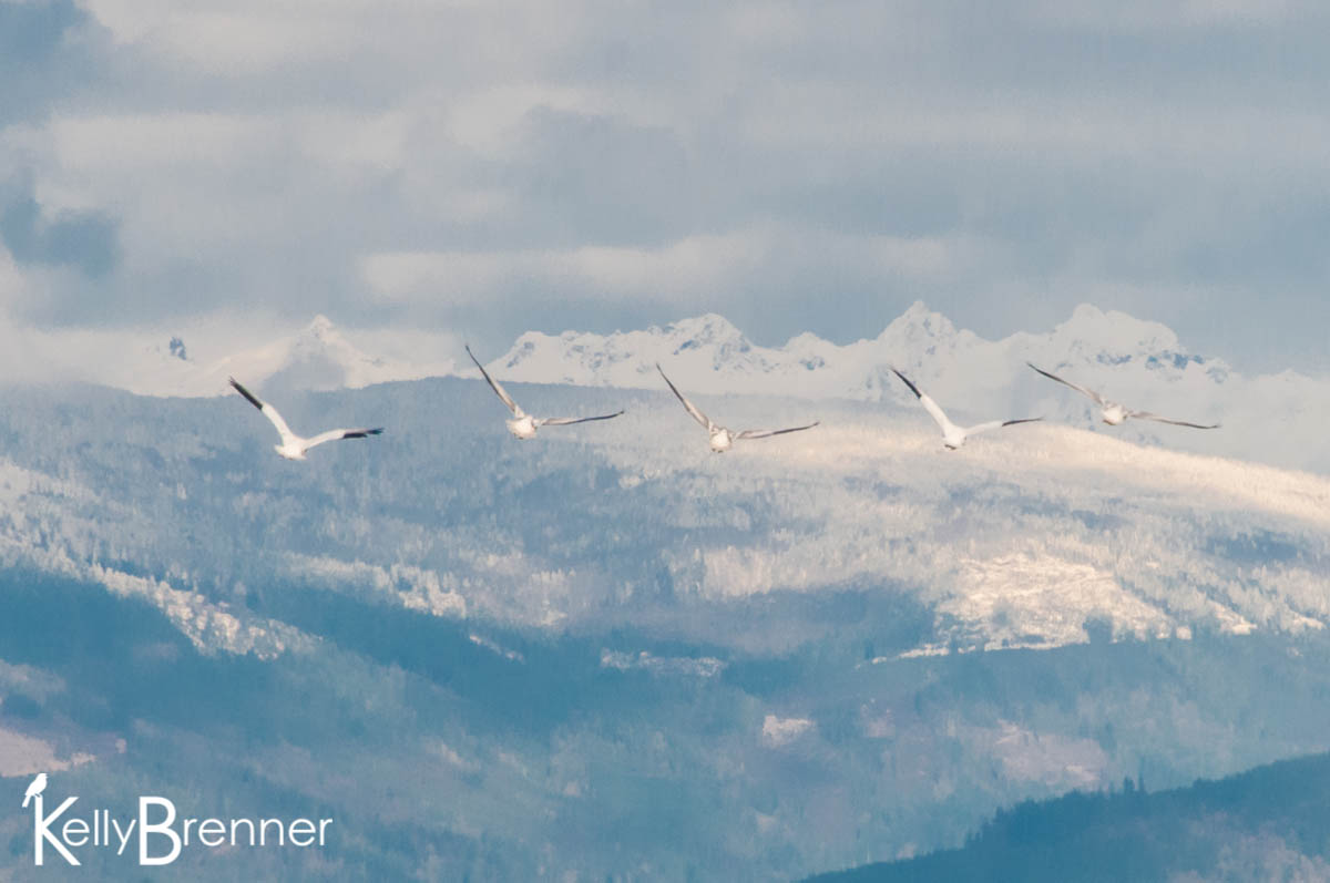 5 Favorite Washington Nature Photos of 2014