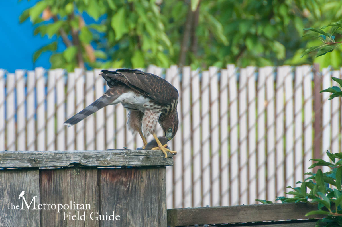 5 Favorite Backyard Habitat Photos of 2014
