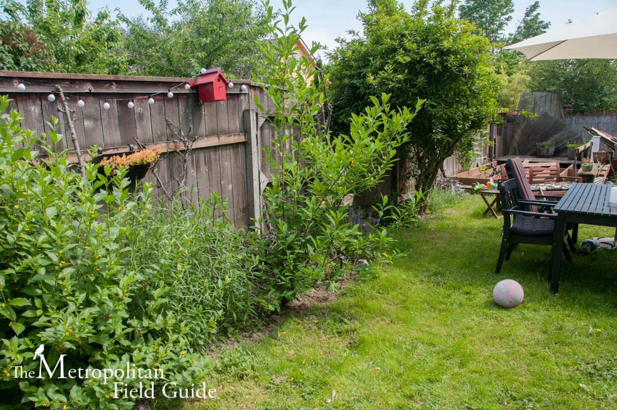 Diary of an Urban Wild Garden: The Beginning