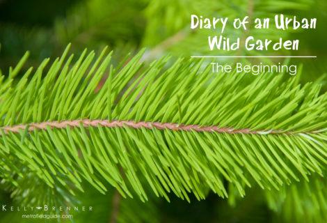 Diary of an Urban Wild Garden: The Beginning