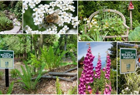 Visiting Certified Community Wildlife Habitats