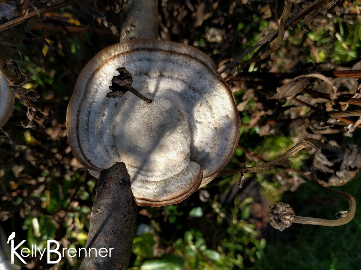 365 Nature – Day 10