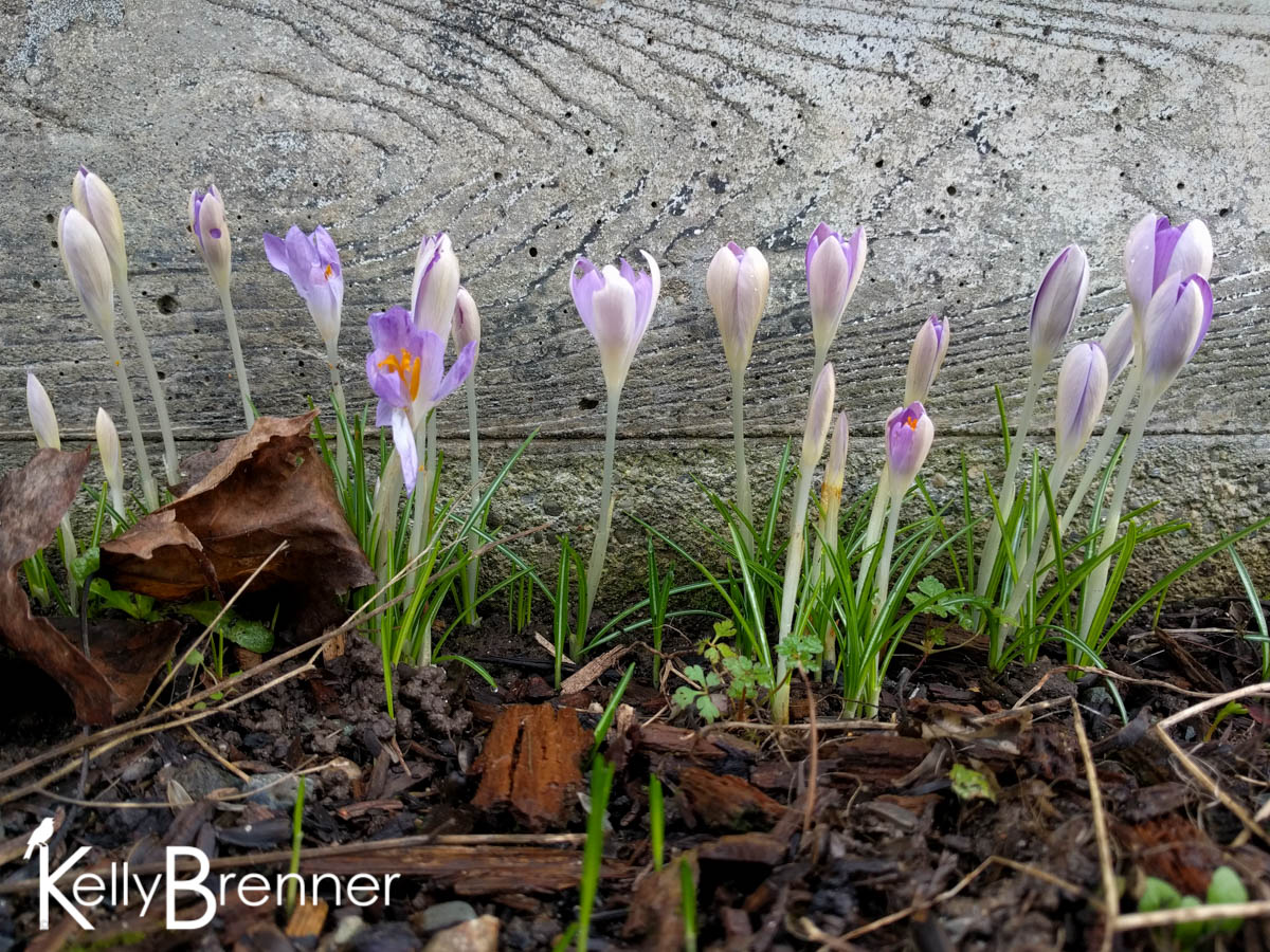 365 Nature – Day 27
