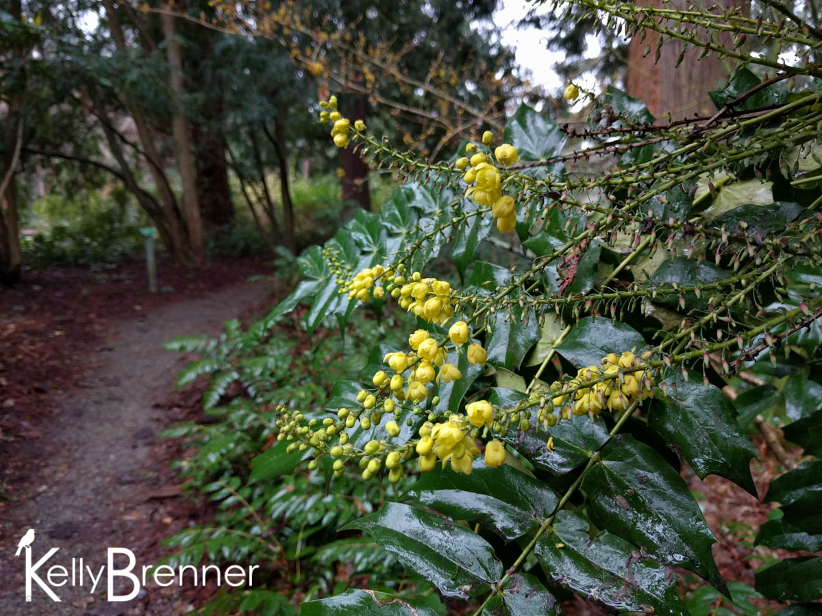 365 Nature – Day 11