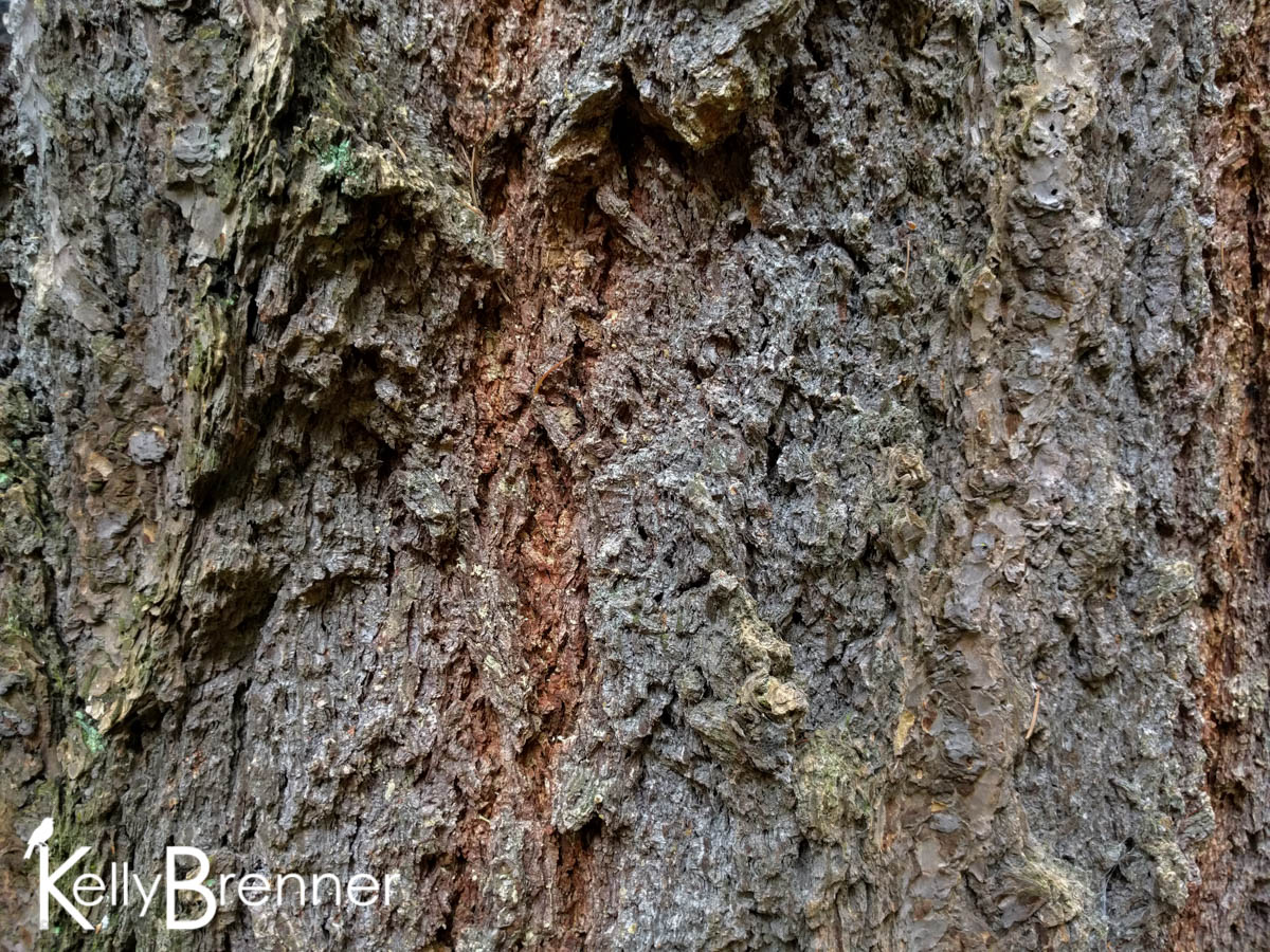 365 Nature – Day 20