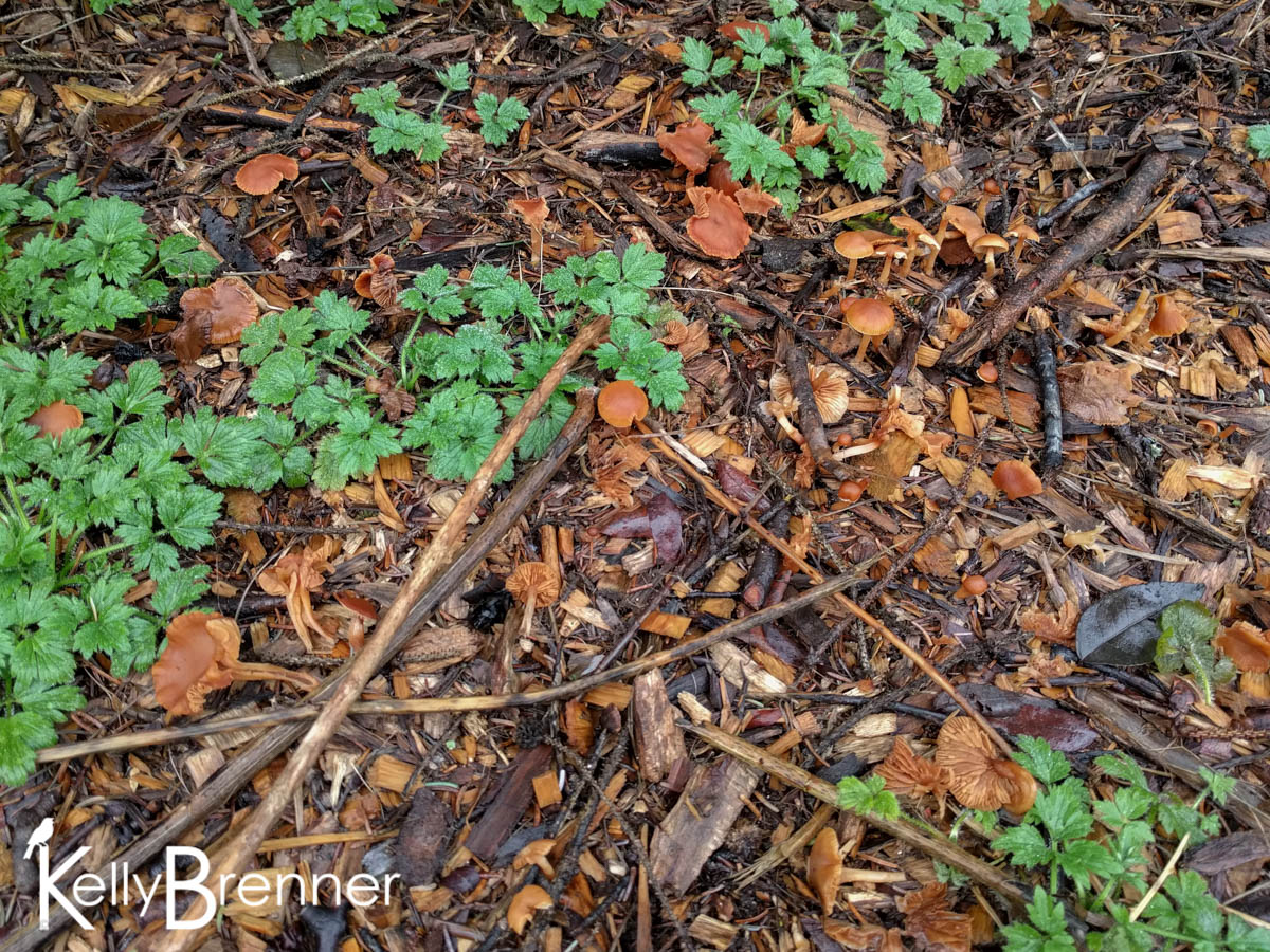 365 Nature – Day 15
