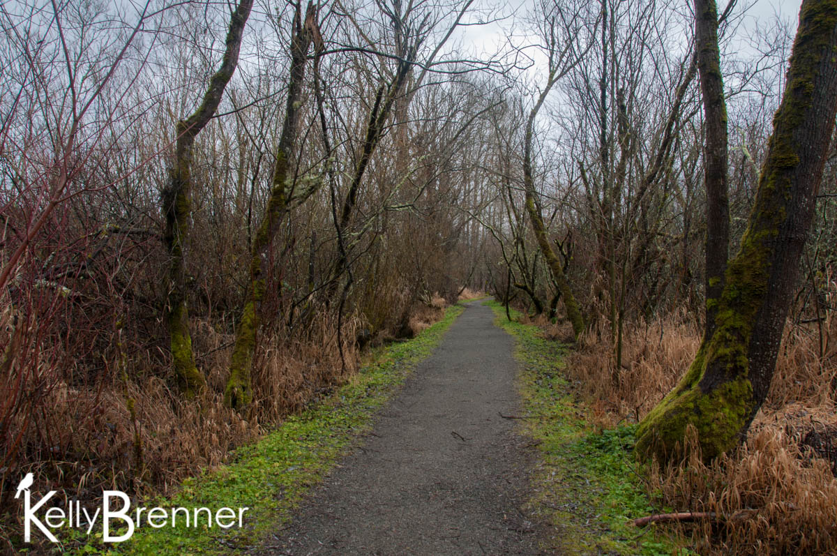 365 Nature – Day 17