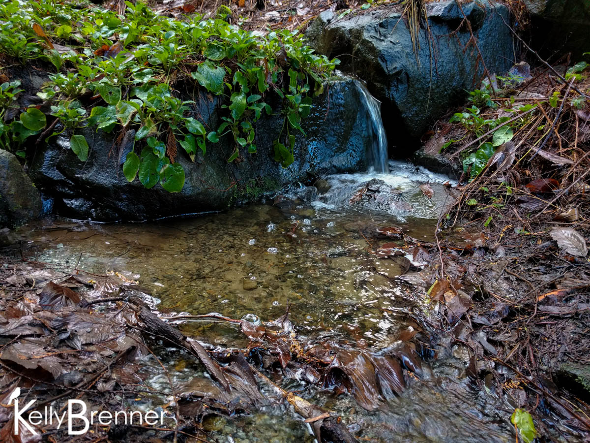 365 Nature – Day 43