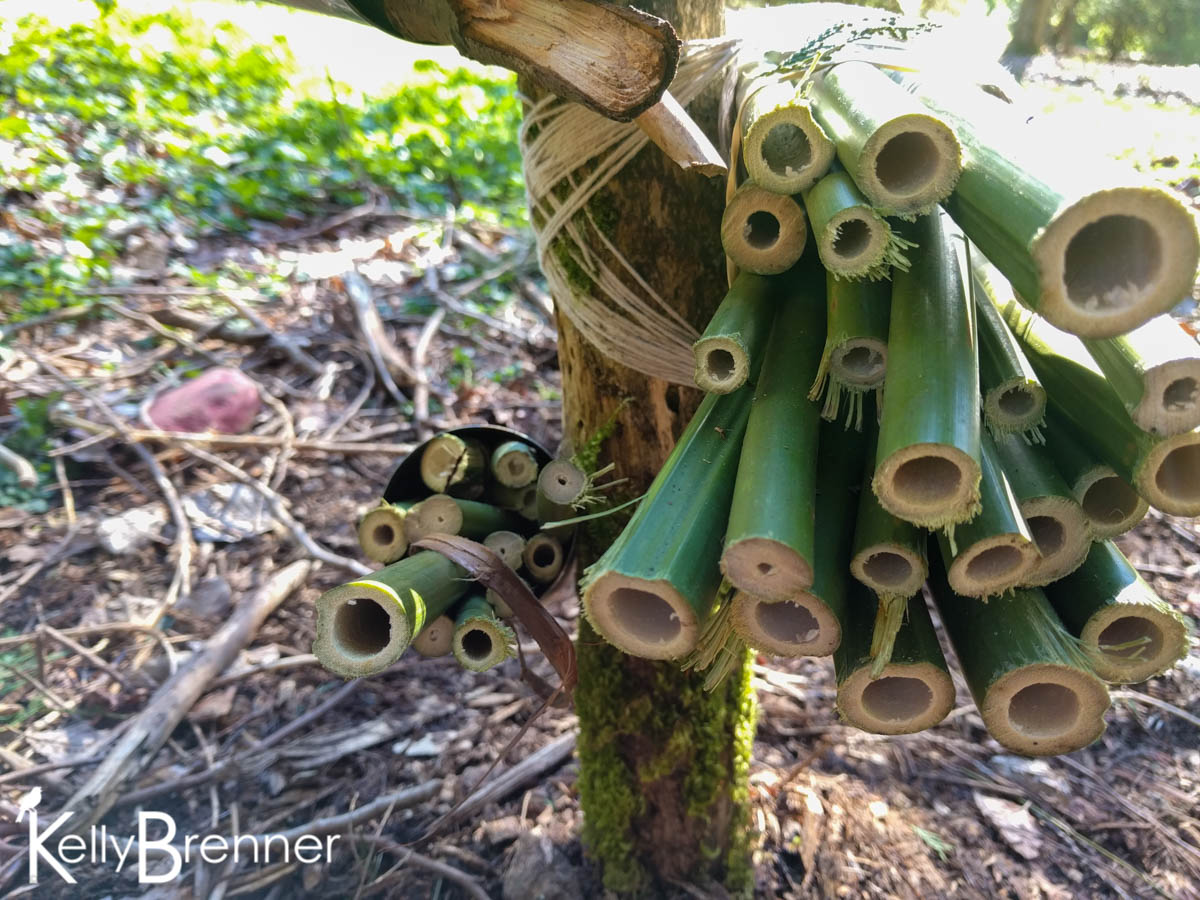365 Nature – Day 90