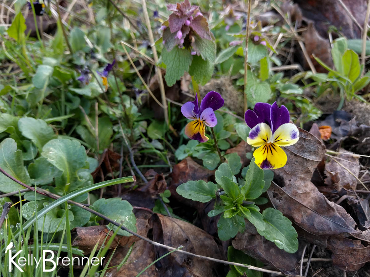 365 Nature – Day 91
