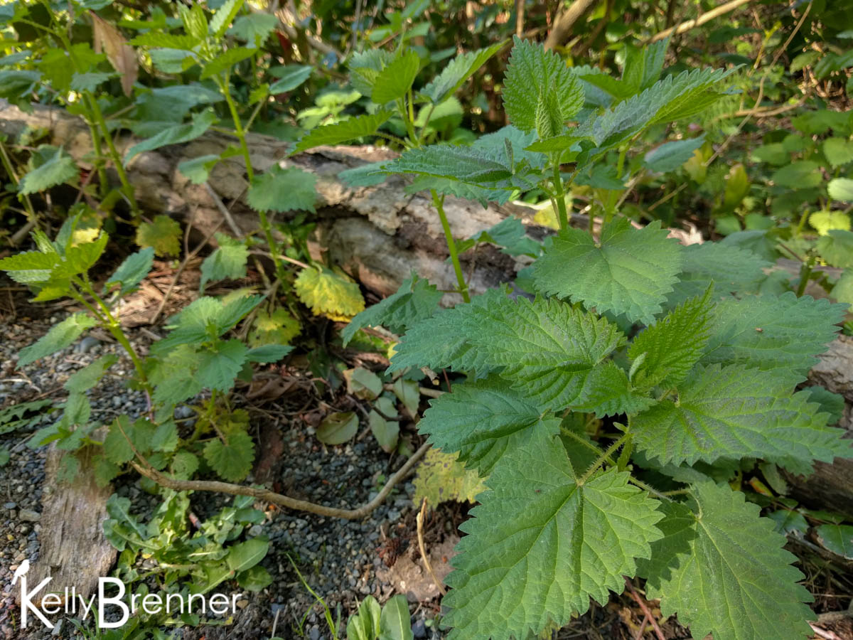 365 Nature – Day 92