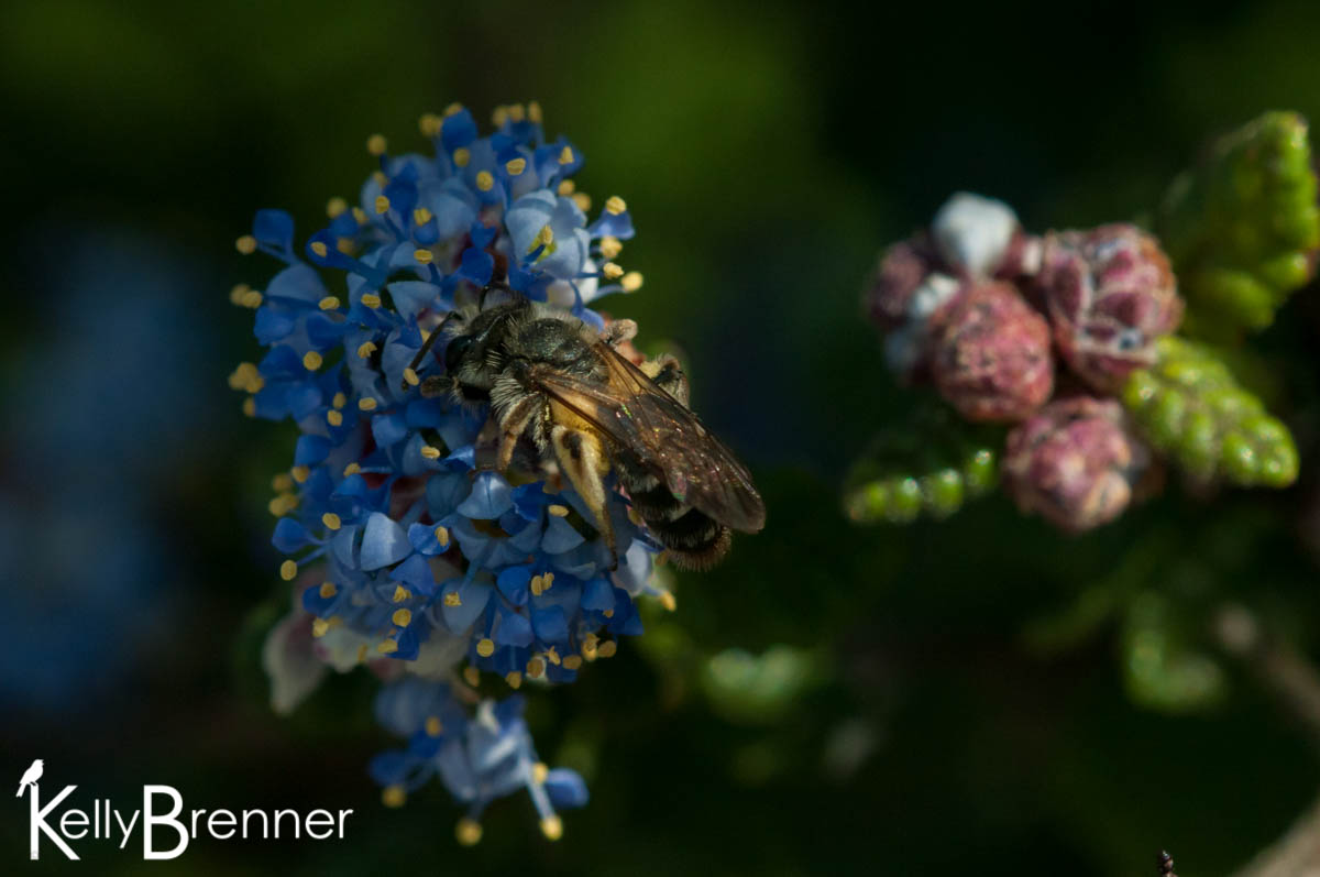 365 Nature – Day 115