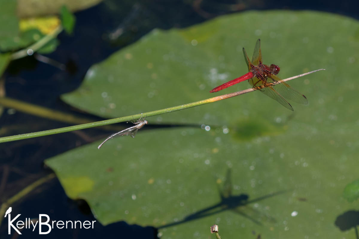 365 Nature – Day 158