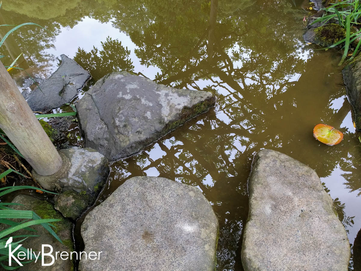 365 Nature – Day 204