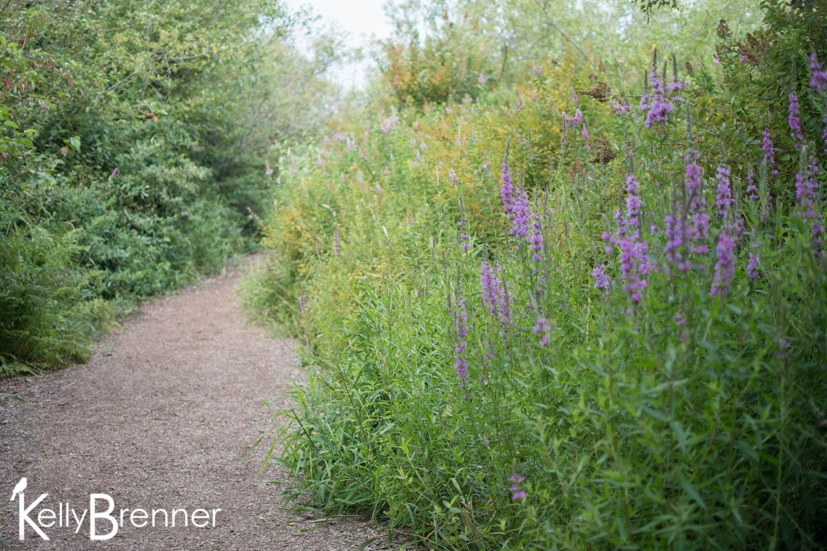 365 Nature – Day 200