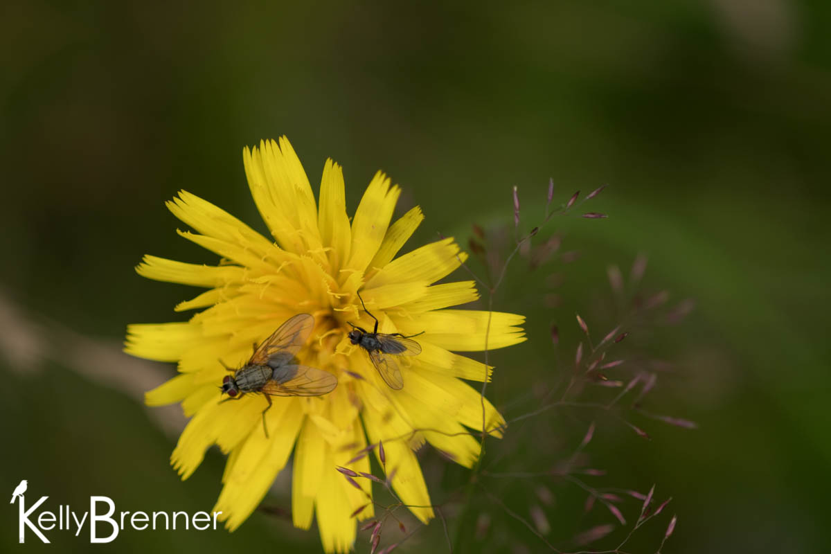 365 Nature – Day 208