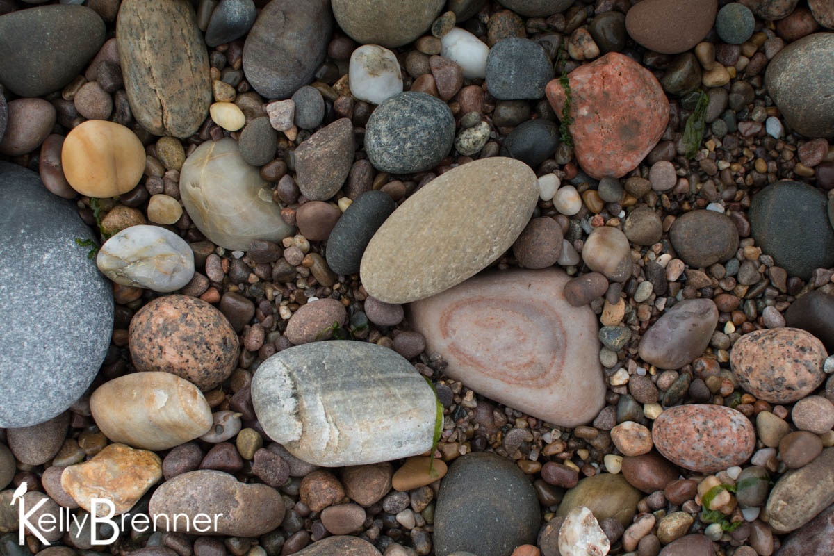 365 Nature – Day 209